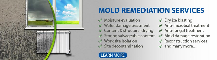 Mold Removal and Mold Remediation Raleigh NC